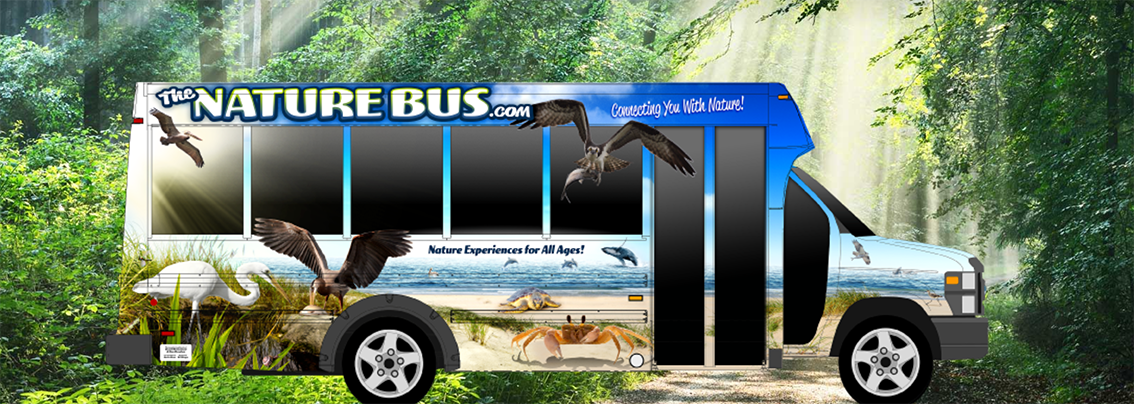the nature bus tours