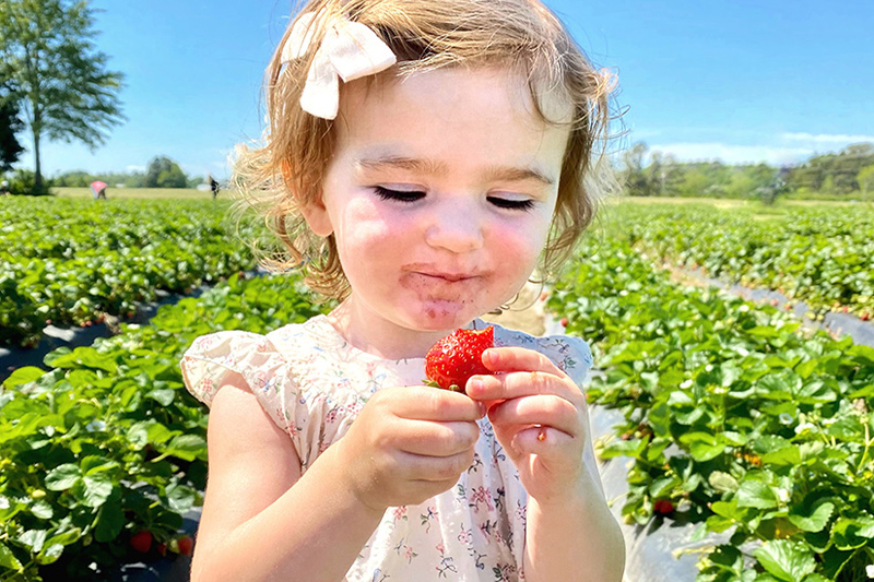 Virginia Beach strawberries